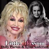 Little Blossom von Various Artists