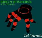 Olé! Tarantula by Robyn Hitchcock