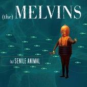 A Senile Animal by Melvins