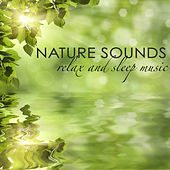 Nature Sounds Relax and Sleep Music - Natural White Noise and Sounds of Nature for Deep Sleep, Zen Meditation, Lullabies for Baby Sleep and Relaxation, Ambient Sounds for Good Night Sleep and Lucid Dreams by Sleep Music