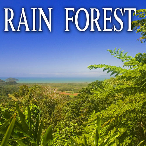 Rain Forest by Nature Soundscape