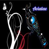 Avialae by Antone