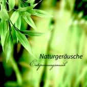 Naturgeräusche Entspannungsmusik - Beste New Age Meditationsmusik und Wellness Spa Music für Tiefentspannung von Entspannungsmusik