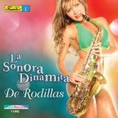 De Rodillas von La Sonora Dinamita
