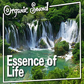 Essence of Life by Organic Sound