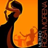 Rosa Morena de Miltinho