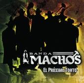 El Proximo Tonto by Banda Machos