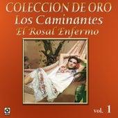 Colección de Oro Vol. 1 el Rosal Enfermo by Los Caminantes