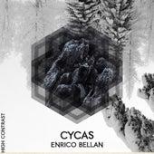 Cycas by Enrico Bellan