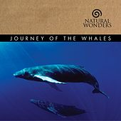 Journey Of The Whales by David Arkenstone