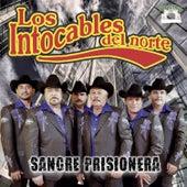 Sangre Prisionera by Los Intocables Del Norte