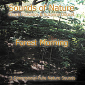 Forest Morning by Suzanne Doucet & Chuck Plaisance