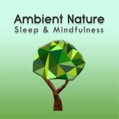 Ambient Nature (Sleep & Mindfulness) by Sleepy Times