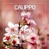 Astonia von Calippo