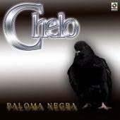 Paloma Negra de Chelo