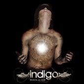 Busca la Luz by Indigo