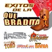 Exitos de la Quebradita by Various Artists