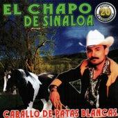 Caballo De Patas Blancas de El Chapo De Sinaloa
