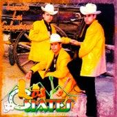 Escuche Las Golondrinas by Los Cuates De Sinaloa