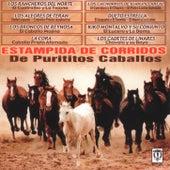 Estampida De Corridos De Purititos Caballos by Various Artists
