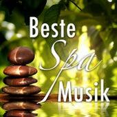 Beste Spa Music: Entspann New Age klingt für Angst und Stress in Ihrem Leben zu kämpfen mit Regen, Wellen, Wind und Tierstimmen von Various Artists
