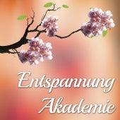 Entspannung Akademie - Musik für Meditation und für Hatha Yoga mit Flöte, Tierstimmen, Regen und Wellen von Various Artists