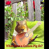 What Does a Guinea Pig Do? by Mick Foster