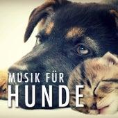 Musik für Hunde zum Einschlafen von Various Artists