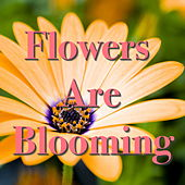 Flowers Are Blooming by Various Artists