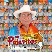 Te He de Querer by Los Pajaritos De Tacupa