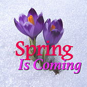 Spring Is Coming de Various Artists