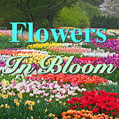 Flowers In Bloom de Various Artists