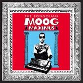 Moog Maximus by The Bongolian