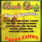 Viva la Tambora - Puros Exitos, Vol. 1 by Various Artists