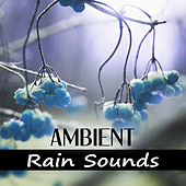 Ambiant Rain Sounds - Sound of Rainfall, Calm Music, Relax, Water, Serenity Music, Reduce Anxiety, Massage by Water Music Oasis