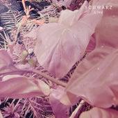 Live by Schwarz