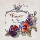 Pansies by Herb Alpert