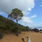Super Trees de Knights Of The Sea