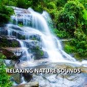 Relaxing Nature Sounds de Sounds Of Nature
