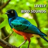 Lively Bird Sounds by Bird Sounds