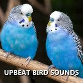 Upbeat Bird Sounds by Bird Sounds