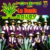 Puros Exitos de Banda Maguey