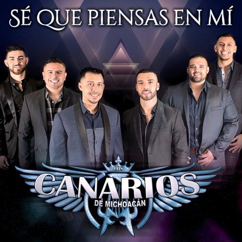 Sé Que Piensas En Mí by Los Canarios De Michoacán