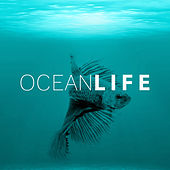 Ocean Life – Healing Water, Soft Music, New Age Relaxation, Sea Waves, Rain Sounds by Water Music Oasis