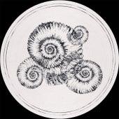 Perisphinctes Tiziani Remixes von Roberto