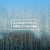 A Collection of Rain & Nature by Various Artists