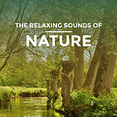 The Relaxing Sounds of Nature by Various Artists