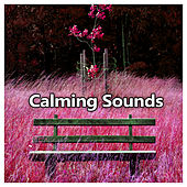 Calming Sounds – Classical Sounds for Listening and Relaxation, Calm, Instrumental Music, Melodies for Soul, Bach After Work von Best Relaxing Music Consort