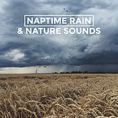 Naptime Rain & Nature Sounds by Various Artists