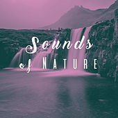 Sounds of Nature by Various Artists